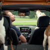 "New Chevy Cruze Hatchback commercial, ""Real Dogs Not Actors"""