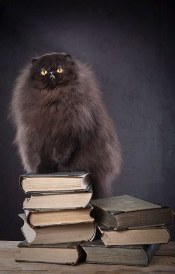 cat sitting on stack of books novels reading literature