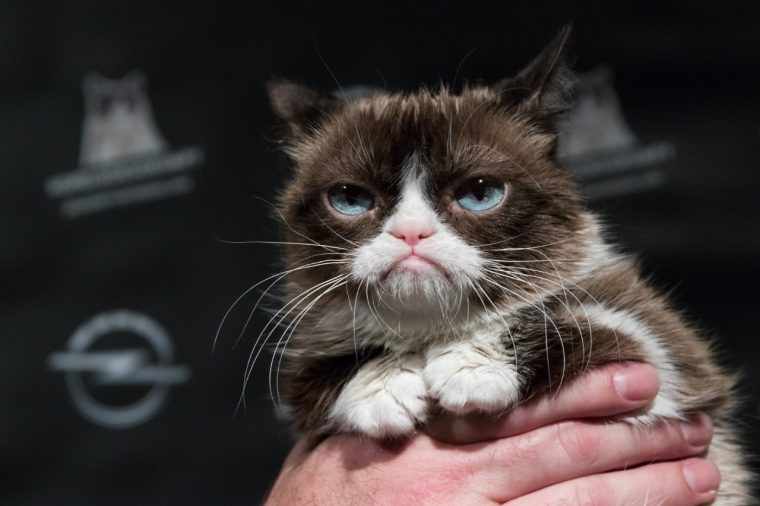 Grumpy Cat Opel thing