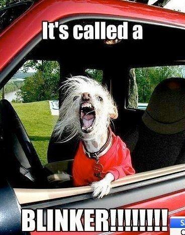 turn signal dog