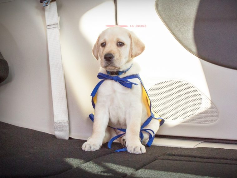 Foley is the first official four-legged mascot for Chrysler