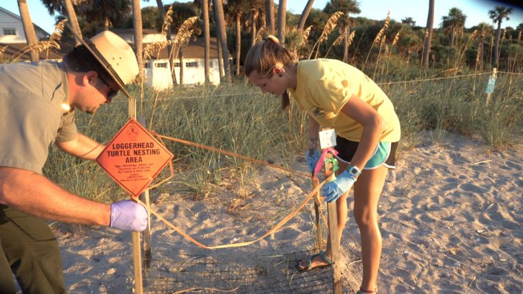 Sea Turtle Specialist, Leah Schwartzentruber, and Park Ranger, John Greider, –marking and protecting habitats