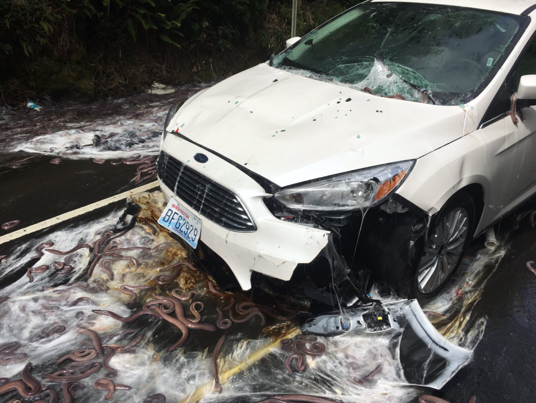 Oregon Drivers Get Slimed in Hagfish Truck Crash | The News Wheel for Hagfish Accident  177nar