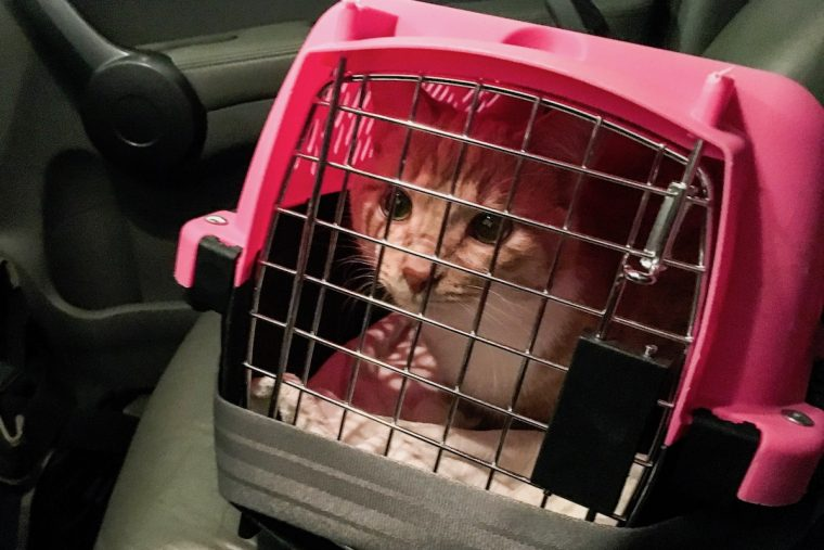 Cat in Crate in Car