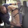 dog seatbelt dog harness