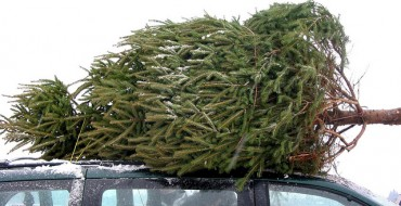 84 Million Americans Will Face the Challenge of Safely Getting a Christmas Tree Home This Year