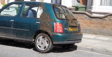 Bees Apparently Love the Nissan Micra
