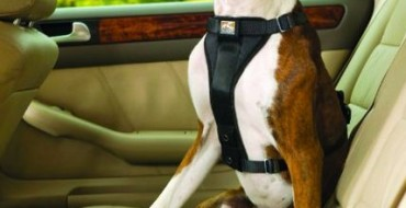 Responsible Dog Ownership Month: How to Ride in Your Car with Your Dog