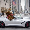 Chevy Cancer Survivors Celebrate National Teddy Bear Day