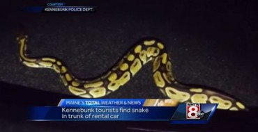 New Rental Car Security Feature: Snakes!