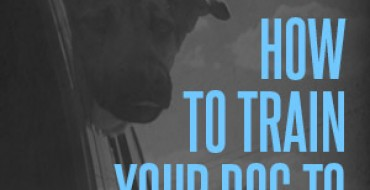 Infographic: How to Train Your Dog to Ride in the Car