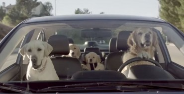 [WATCH] The Subaru Dog Commercials Are Too Cute for Words