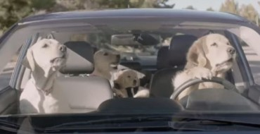 Who Are the Dogs in the Subaru Dog Commercials?