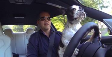 Adorable French Bulldog Tui Drives a BMW M4, Burns Rubber