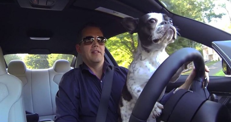 Adorable French Bulldog Tui Drives a BMW M4, Burns Rubber