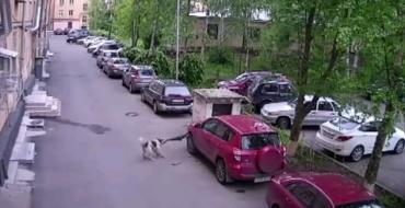 [VIDEO] Russian Dogs Eat Toyota RAV4