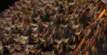 Swarm of Mayflies Closes Down Pennsylvania Bridge