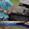 Shark Dies in Florida Truck Crash