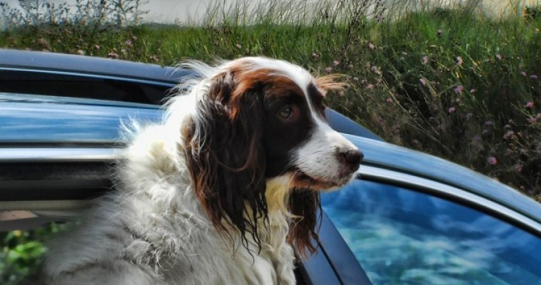 10 Most Effective Ways to Remove Dog Hair from Car Seats