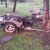 1986 Nissan 300ZX Viciously Mauled by Savage Wild Tree