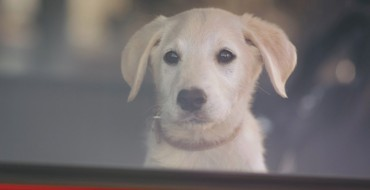 Opel OnStar Ads Feature Cute Dogs and Hot Dads