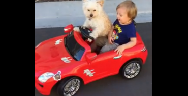 [VIDEO] Dog Drives Toddler Around in Minature Car