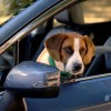 """Subaru's """"The More You Know"""" Video Stars Andy Cohen and His Dog"""