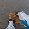 [WATCH] Tiny Kitten Saved from Near Death by Motorcyclist