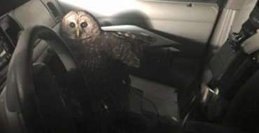 Animal Uprising Seems Imminent as Owl Attacks Police Officer