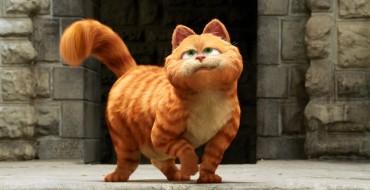 Hyundai Headquarters in California Reunite Missing Cat Garfield with Owners