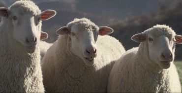 Honda's Super Bowl Commercial for the 2017 Ridgeline is Not <em>Baaa</em>d