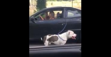 California Woman Uses Pontiac Sunfire to Walk Her Dog [VIDEO]