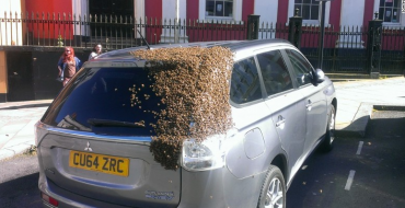 Mitsubishi Outlander PHEV Gets Swarmed by Bees