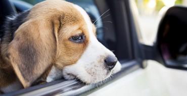 Good Samaritans Can Now Save California Dogs