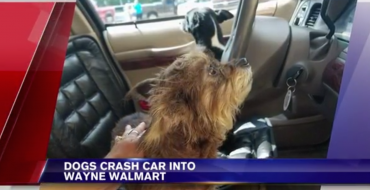 Bad Dog Crashes Master's Car Into a West Virginia Walmart