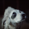 Honda Steals Subaru's Shtick with Emotional Dog Commercial of Its Own
