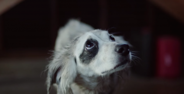 Honda CR-V Ad Campaign Focuses on Helping Dogs in Need
