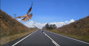 Animals in Australia Might Be Attacking Cars Now