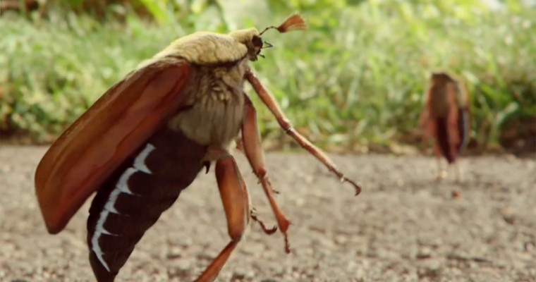 New Commercial: Opel Tries Selling Ampera-e with Insect Snuff Film