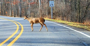 Oh Deer! Massachusetts Man Blames Speeding Ticket on Nearby Deer