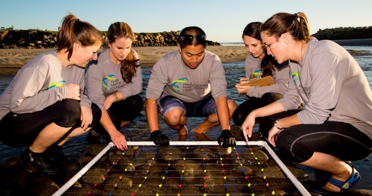 Honda Launches Marine Science Foundation to Preserve Coasts