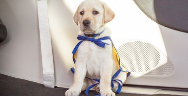 "Chrysler Introduces Foley the ""PacifiPuppy"""