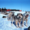 Team of Sled Dogs Drags Jeep Cherokee Out of the Snow in Alaska