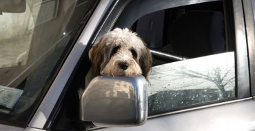 Man's Best Friend Would Have Hated Car Rides in 1935
