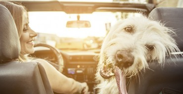 How to Get Pet-Friendly Vehicles to Smell Pet-Free