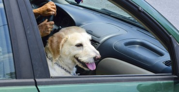 Human Habits that Put Canines at Risk in the Car