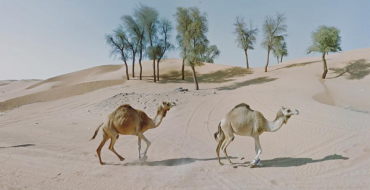 Photographer Travels the World via Google Street View