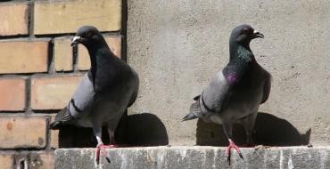 British Property Installs Bird Spikes to Keep Cars Pretty