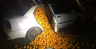 Family Fills Three Vehicles with Thousands of Oranges in Attempted Citrus Theft