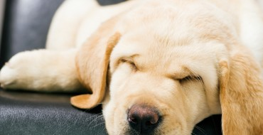 How to Make Your Puppy's First Car Ride Anxiety-Free